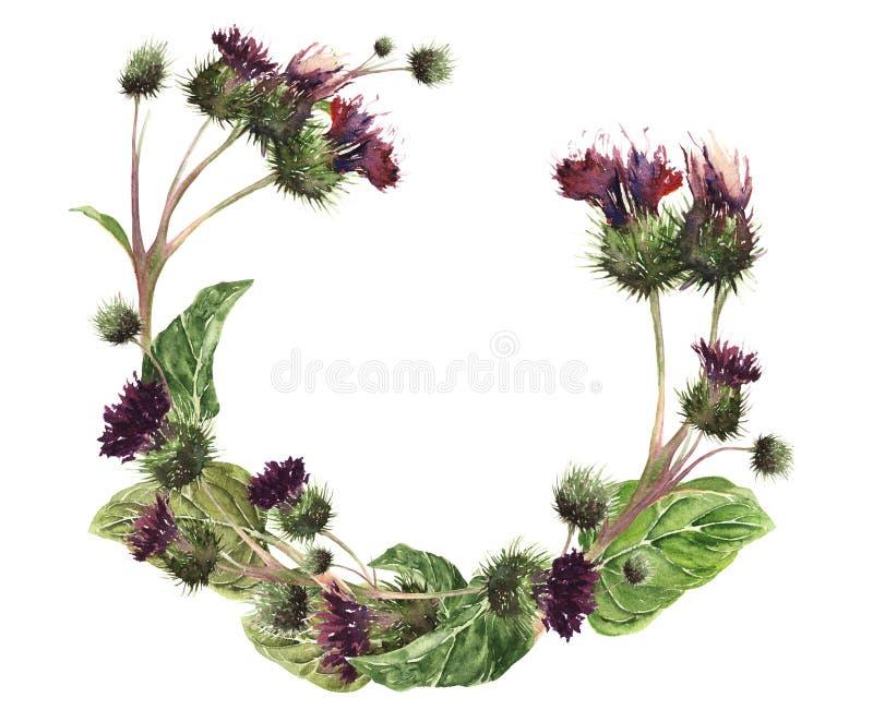 手拉的水彩隔绝了一株五颜六色的柔和的草甸蓟的花圈 植物的葡萄酒水彩例证 c的设计 向量例证