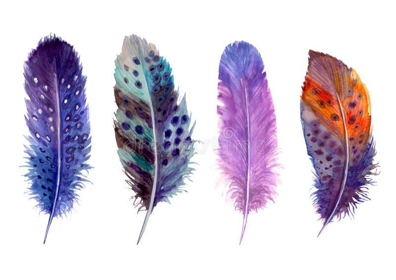 手拉的水彩鸟羽毛充满活力的boho样式明亮的例证 皇族释放例证