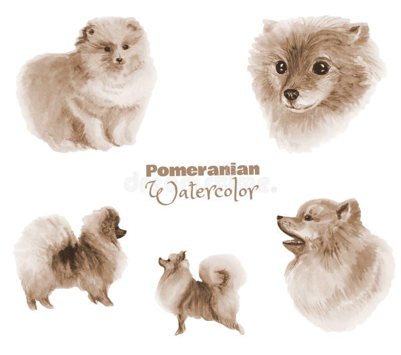 手拉的水彩Pomeranian狗 在白色隔绝的狗单色彩色组  库存例证
