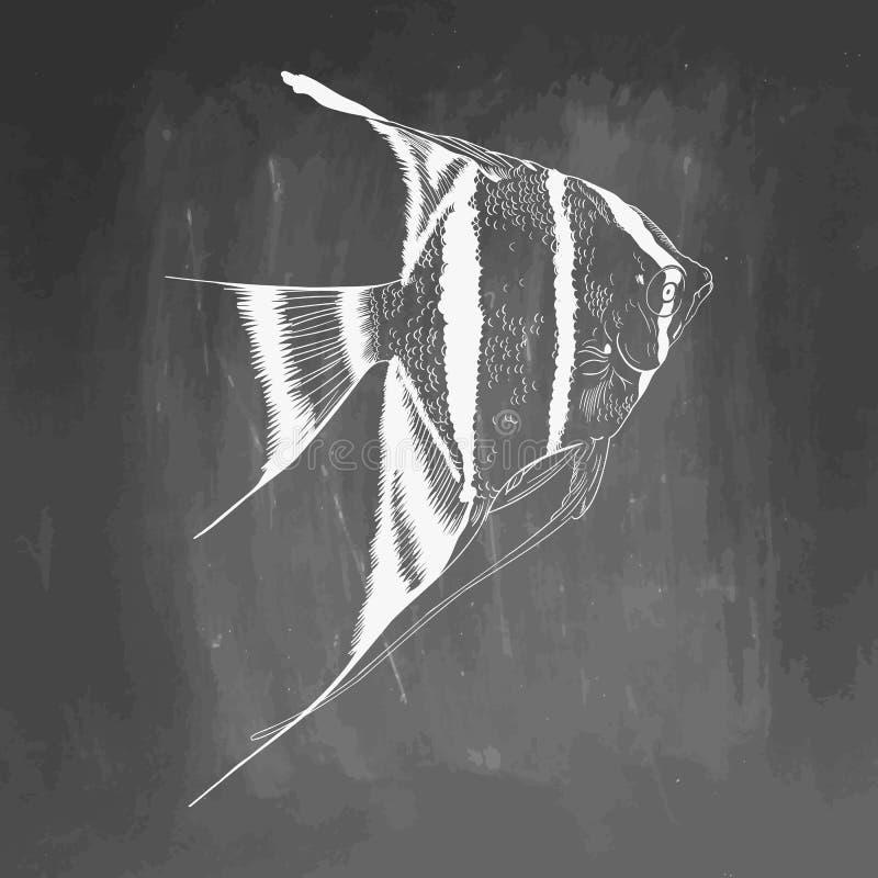 手拉的水族馆鱼剪影 在黑板隔绝的元素 ?? 10 eps 库存照片