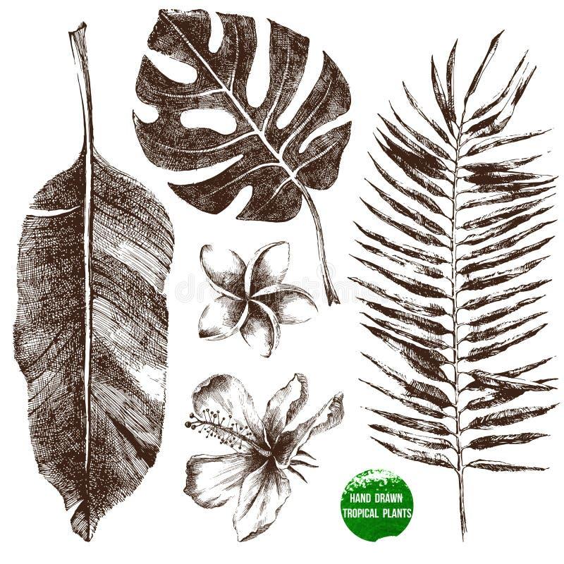 手拉的热带叶子和花 库存例证