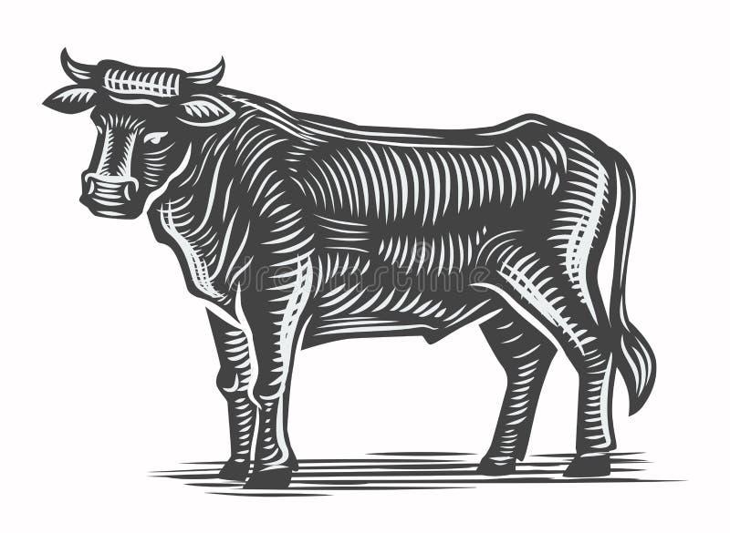 手拉的牛肉 库存例证