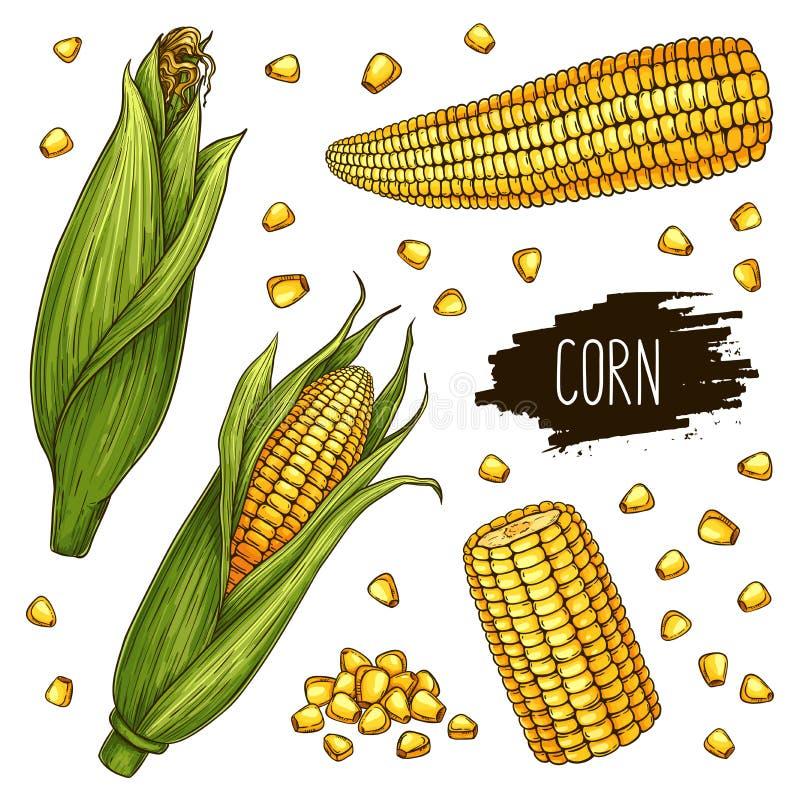 手拉的玉米棒子和五谷集合 库存例证