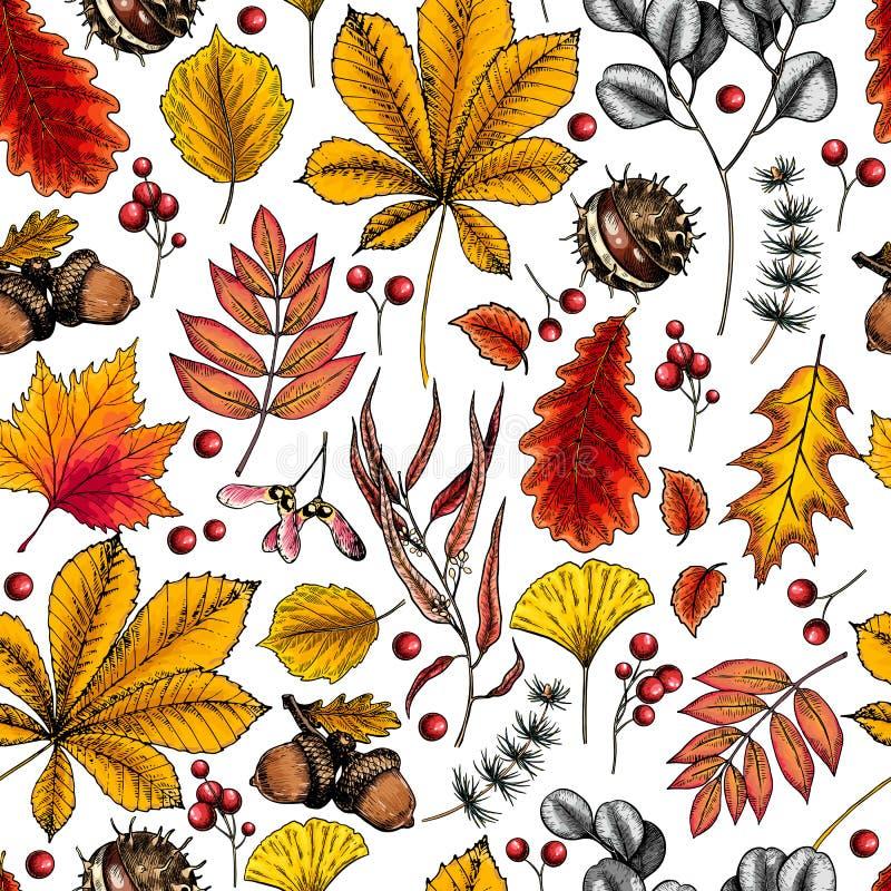 手拉的秋天叶子 树叶子的传染媒介无缝的样式 秋天森林folliage 槭树,橡木,栗子,桦树,橡子 皇族释放例证