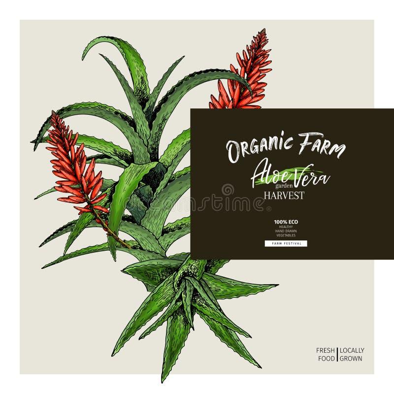 手拉的芦荟维拉分支和花 被刻记的传染媒介横幅 润湿和愈合 食品成分,芳香疗法 库存例证