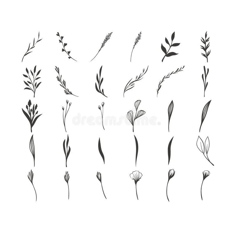 手拉的花卉传染媒介元素 自由通配 为邀请,贺卡,行情,博克,婚礼框架完善 皇族释放例证