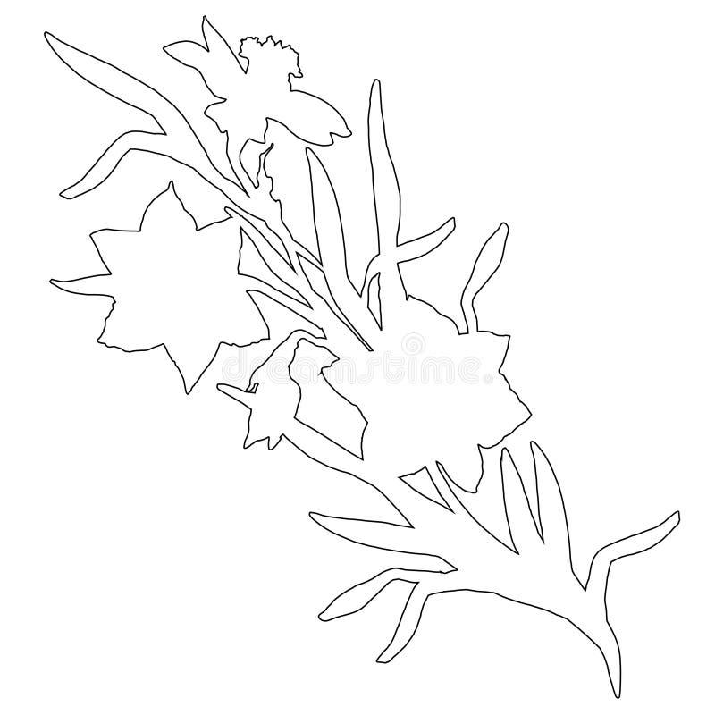 手拉的花黄水仙,在白色隔绝的水仙植物的等高  库存例证