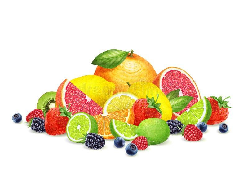 手拉的莓果和果子在白色背景 库存图片