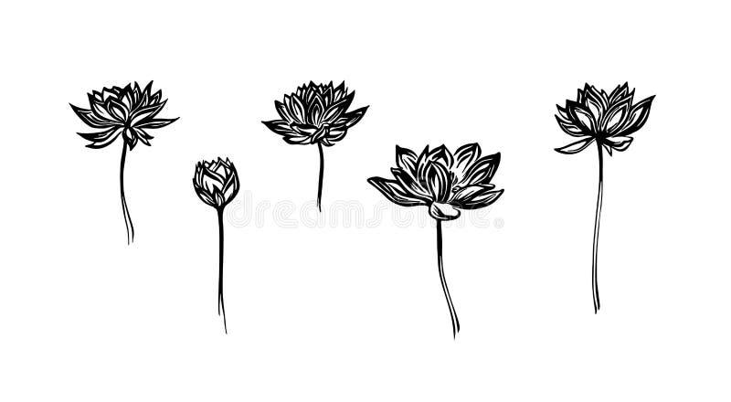 手拉的莲花集合,概述剪影 在白色背景隔绝的传染媒介贷方图画 图象例证 皇族释放例证