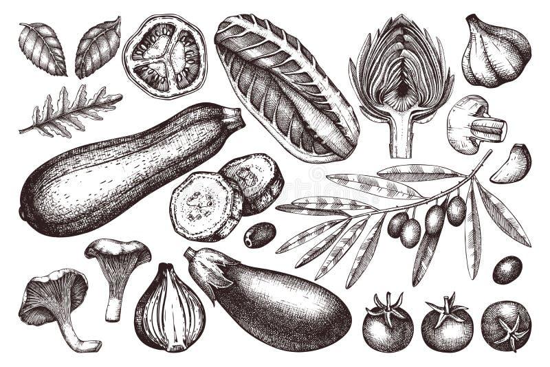 手拉的菜,香料,mushroomes的传染媒介汇集速写 健康食品例证集合 葡萄酒农厂新鲜的produ 库存例证