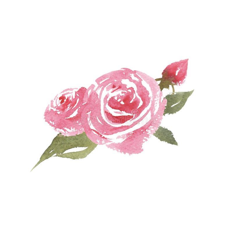 手拉的葡萄酒水彩桃红色玫瑰 向量例证