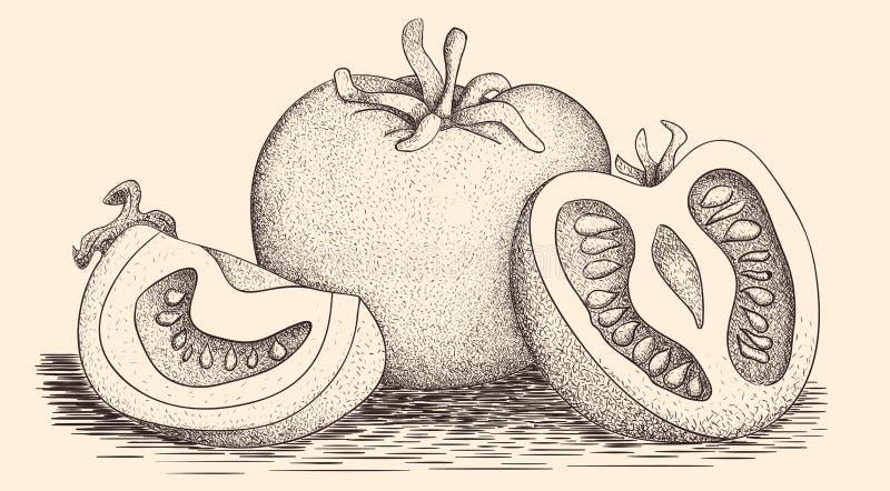 手拉的蕃茄 图库摄影