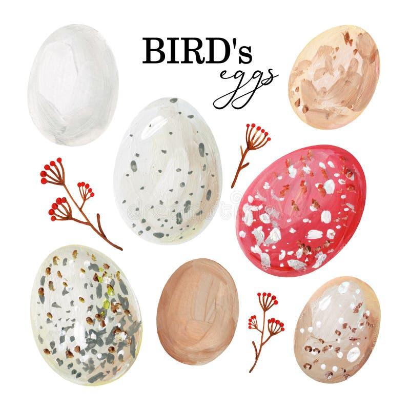 手拉的被察觉的鸟鸡蛋和分支用莓果 皇族释放例证