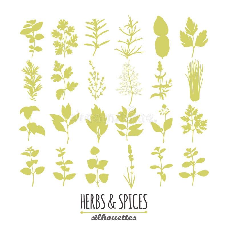 手拉的辣草本剪影的汇集 您的设计的烹饪元素 向量例证