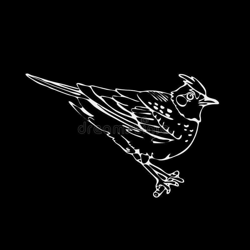 手拉的铅笔图表,百灵,麻雀,夜莺黑鹂 库存例证