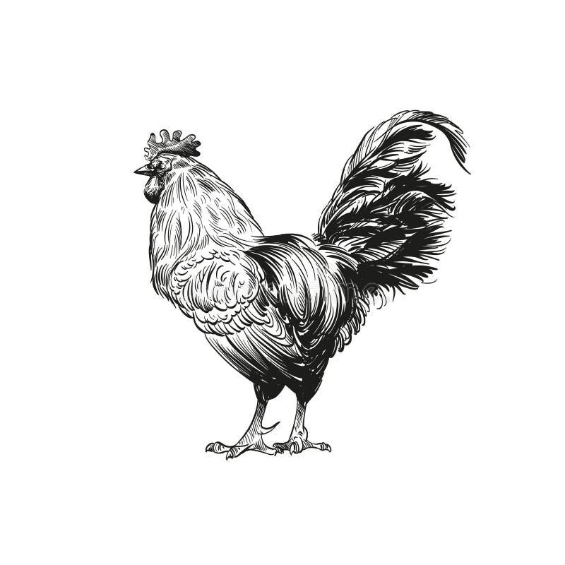 手拉的雄鸡剪影 也corel凹道例证向量 向量例证