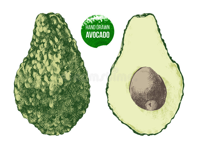 Download 手拉的鲕梨 向量例证. 插画 包括有 剪切, 叶子, 异乎寻常, 成熟, 绿色, 部分, 查出, 营养, 健康 - 72354614