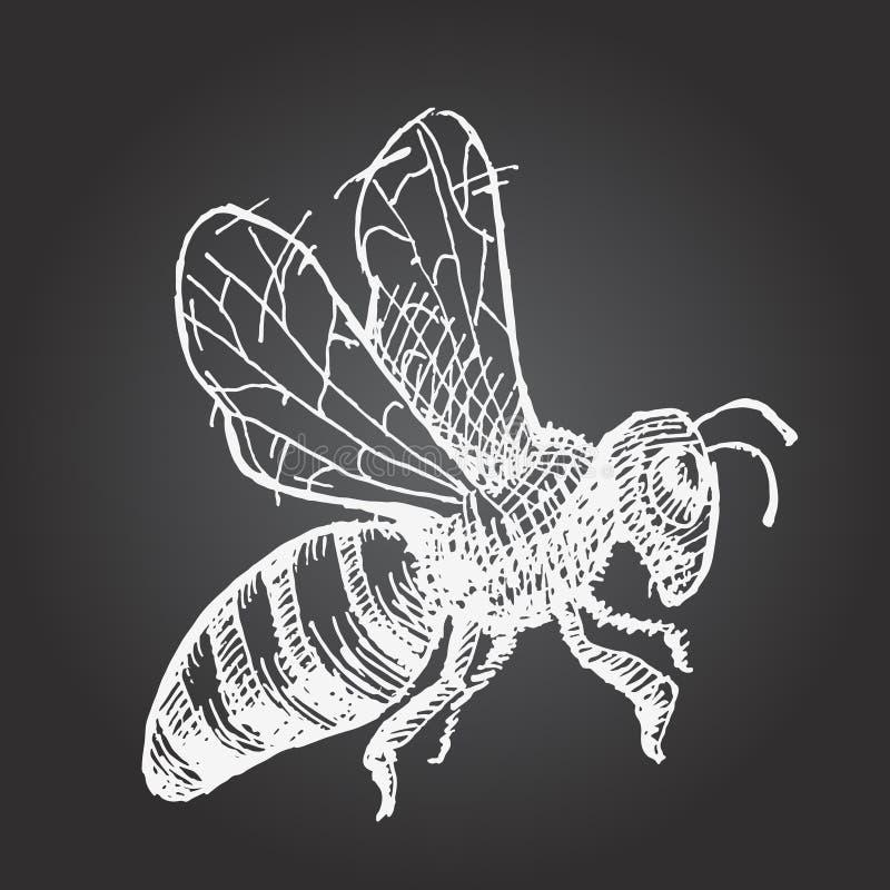 手拉的黄蜂 库存例证