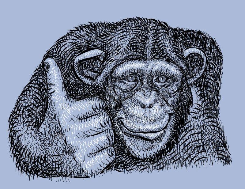 手拉的黑猩猩 皇族释放例证