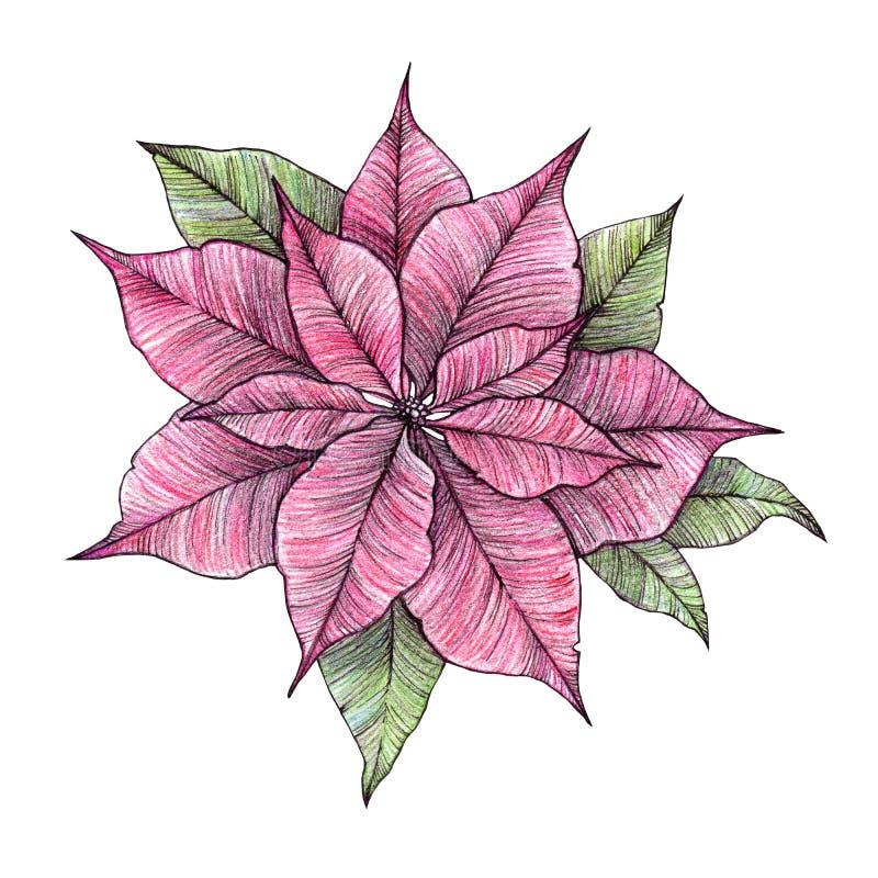 手拉的水彩例证-圣诞快乐一品红 库存例证