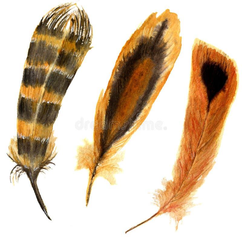 手拉的水彩充满活力的羽毛集合 与条纹羽毛的例证红色 Boho在白色隔绝的样式羽毛 鸟技艺 库存例证