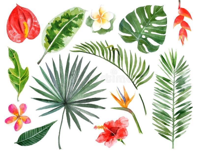 手拉的水彩热带植物 向量例证