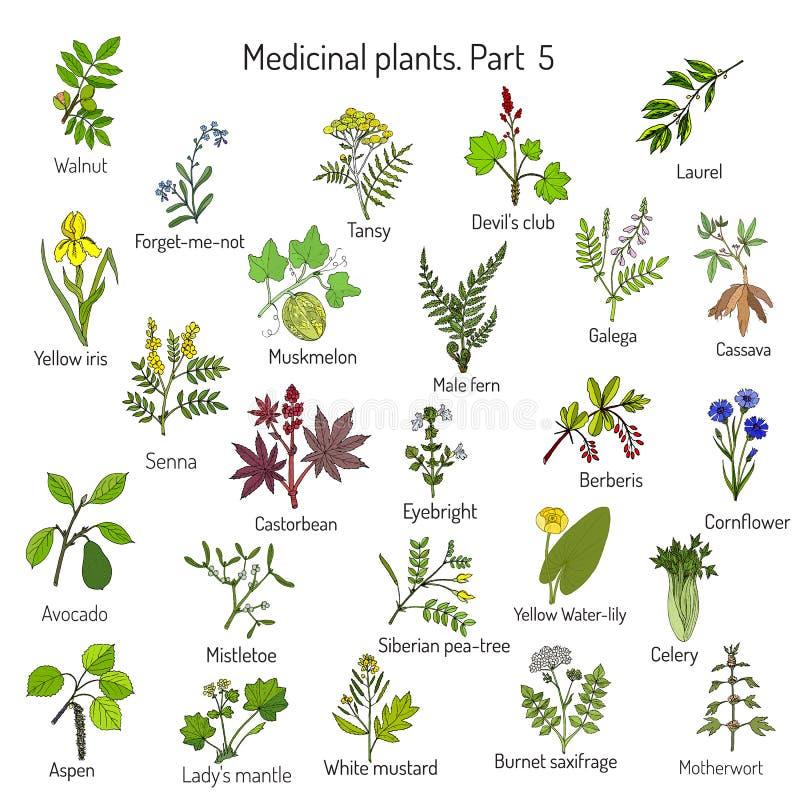 手拉的医疗草本和植物的葡萄酒汇集 向量例证