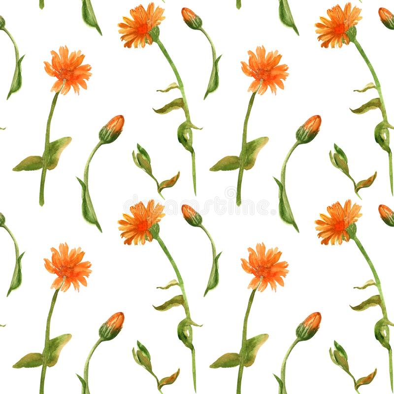 手拉的calenula officinalis的水彩无缝的样式 为卡片,纺织品,织品,医学包裹设计 向量例证