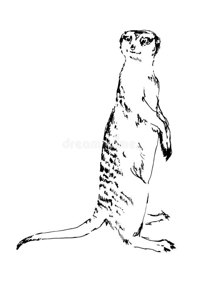 手拉的meerkat 黑色向量例证 一刹那膝上型计算机光草图样式 向量例证