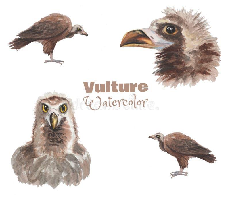 手拉的watercolo雕 鸟集合的不同的图象 向量例证