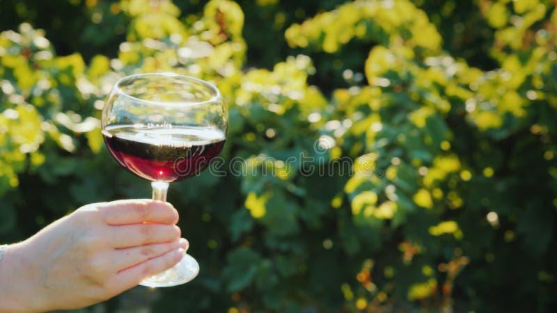 手拿着与红酒的一块玻璃以葡萄园为背景 在酿酒厂的品酒 免版税库存照片