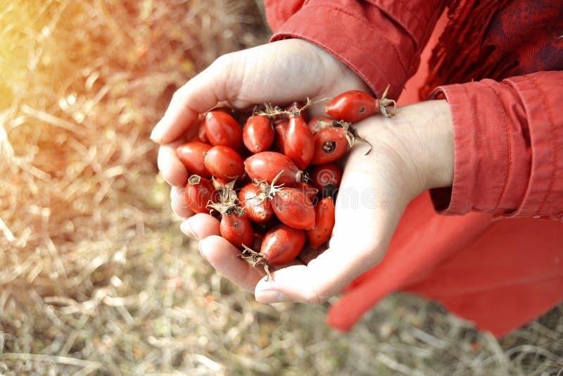 手有很多莓果落概念 免版税库存图片