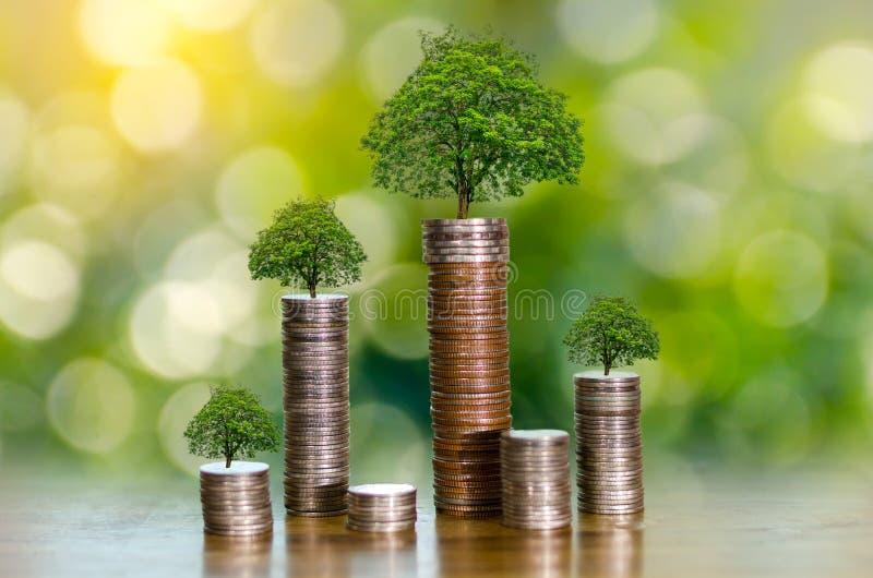 手树在堆增长的硬币树 节省额货币为将来 投资想法和企业成长 绿色背景机智 免版税库存照片