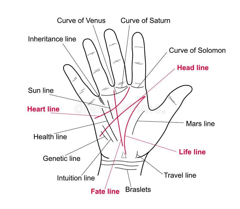 手相术 在人的手上的价值线 库存例证