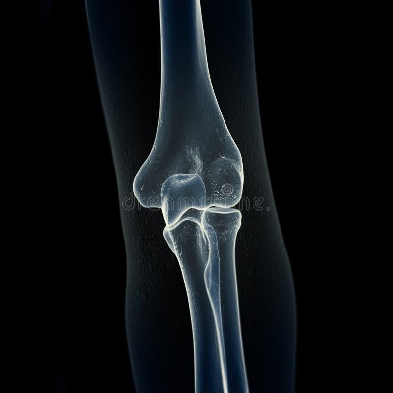 手肘骨头 向量例证