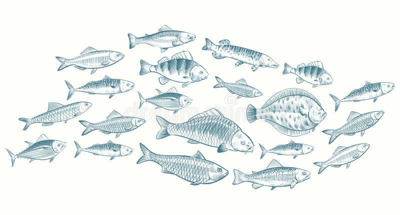 手速写了鱼传染媒介例证 餐馆菜单的水下的生活横幅 向量例证