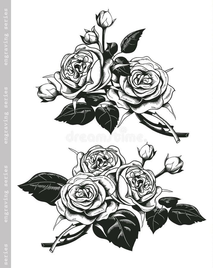 手速写的套在葡萄酒板刻样式的白玫瑰 向量例证