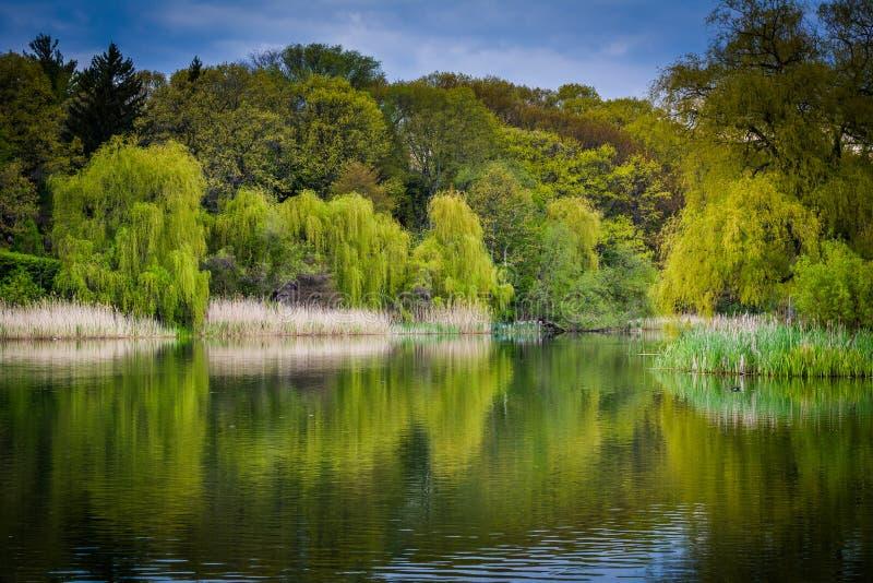 手榴弹兵池塘,高公园的,在多伦多,安大略 图库摄影