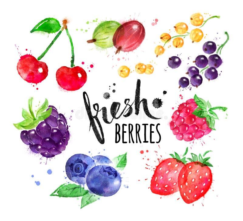 手画水彩套莓果 库存例证