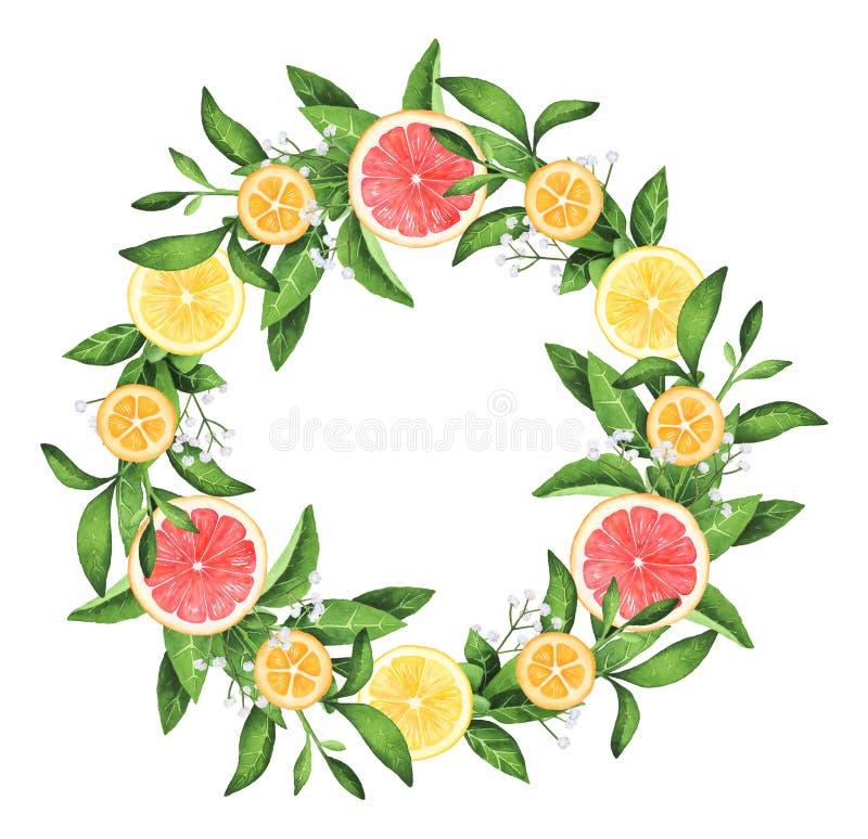 手画水彩柠檬和葡萄柚花圈 免版税库存图片