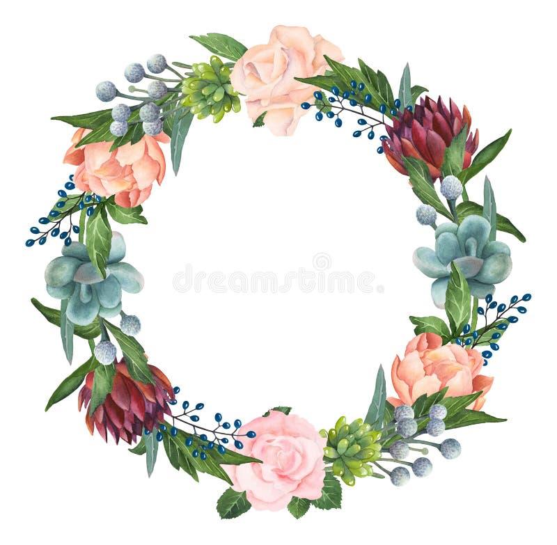 手画水彩玫瑰、多汁植物和牡丹花圈 免版税图库摄影