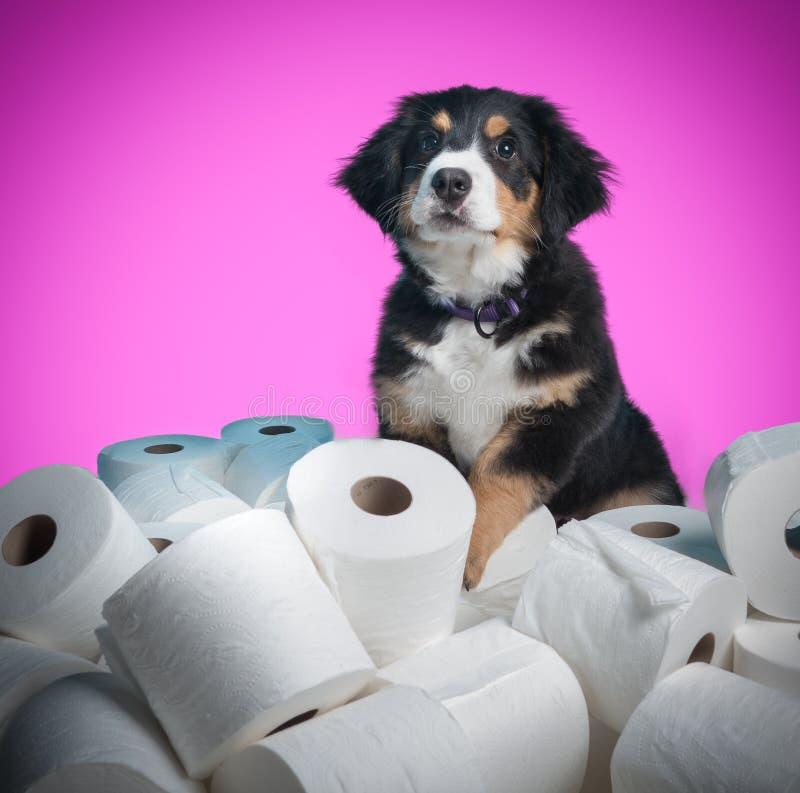 洗手间训练 免版税库存图片