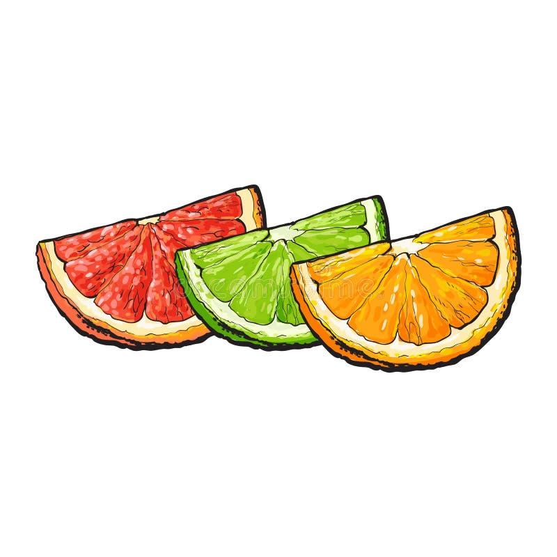 扎营,桔子,葡萄柚,石灰,手拉的例证片断  库存例证