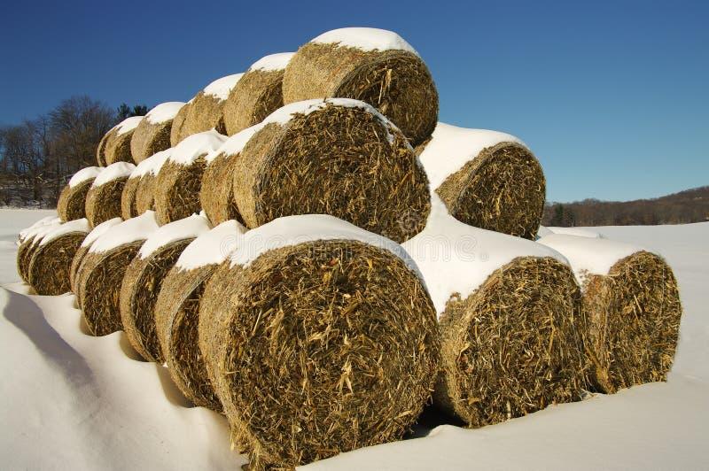 打包玉米饲料冬天 库存图片