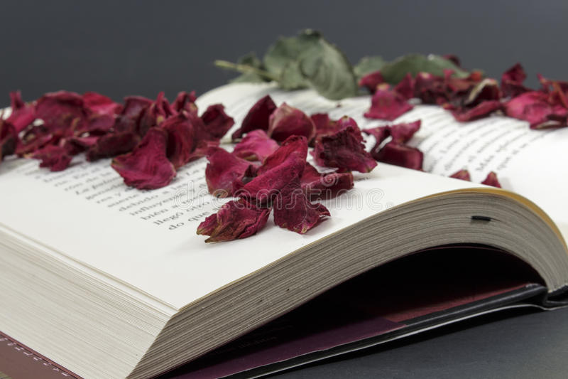 打开与玫瑰花瓣的书 免版税库存图片