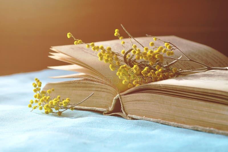 打开与黄色含羞草花的旧书在桌在温暖的阳光下-在软的淡色口气的春天静物画上 库存照片