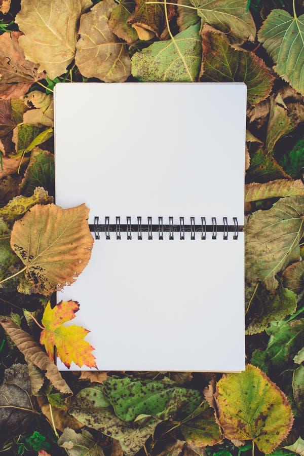 打开在干燥叶子的空白的书在秋天 读书,乡愁, Edu 图库摄影
