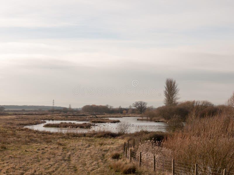 打开在春天夏天池塘水树natu之外的水库场面 库存图片