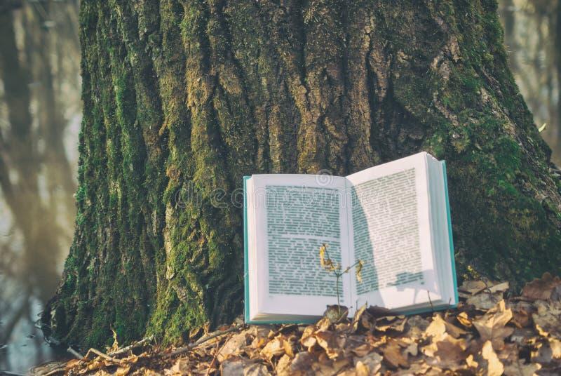 打开在说谎在的蓝色区域的书干燥叶子 背景纹理吠声树在春天自然森林湖 呼叫模糊的阳光 免版税库存图片