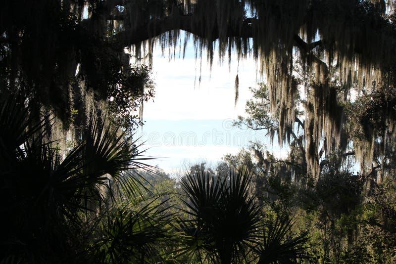 打开对蓝蓝天空的现出轮廓的树 免版税库存照片